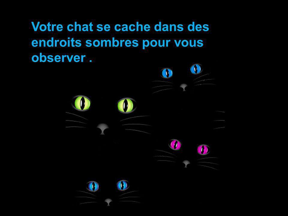 Votre chat se cache dans des endroits sombres pour vous observer .