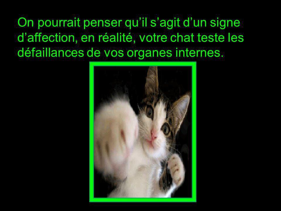 On pourrait penser qu'il s'agit d'un signe d'affection, en réalité, votre chat teste les défaillances de vos organes internes.