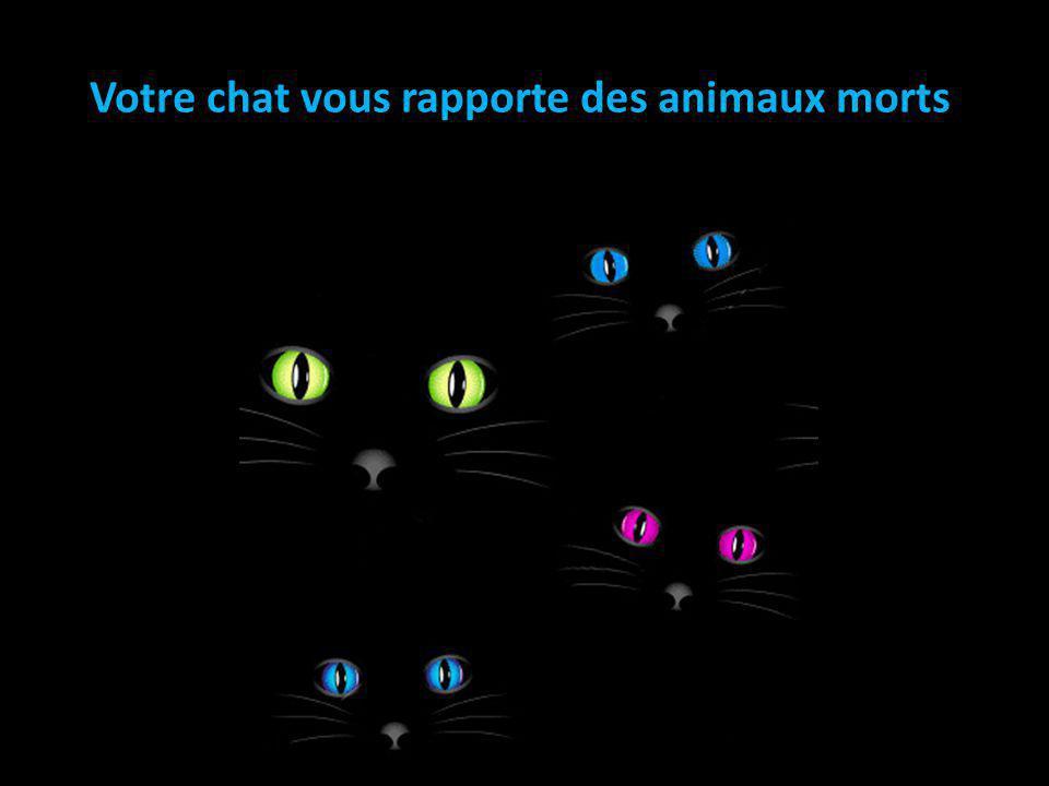 Votre chat vous rapporte des animaux morts