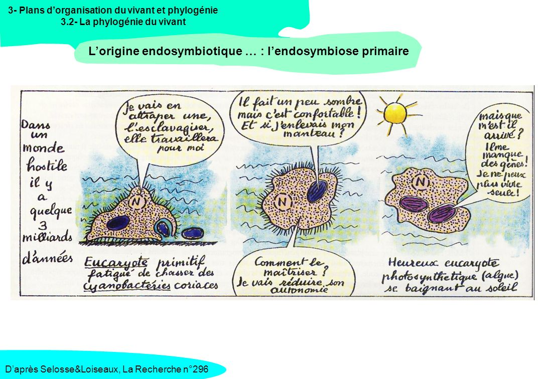 L'origine endosymbiotique … : l'endosymbiose primaire