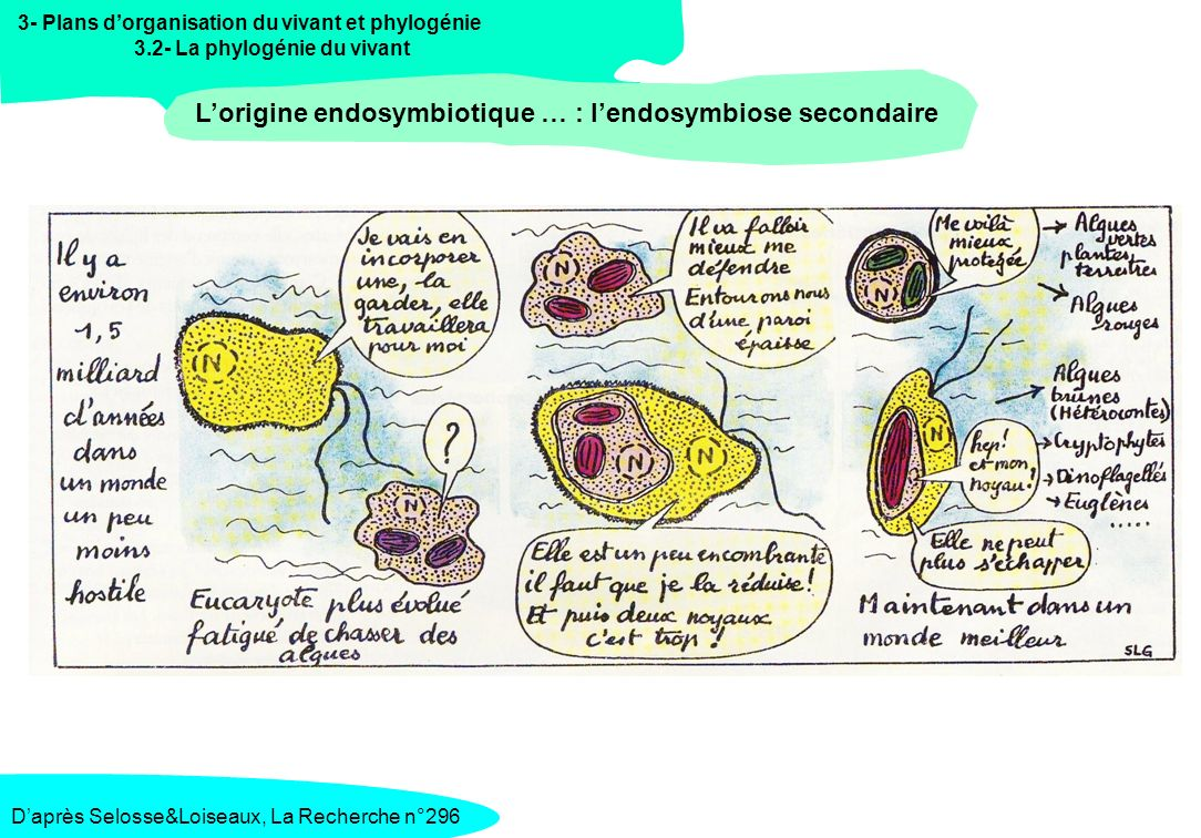 L'origine endosymbiotique … : l'endosymbiose secondaire