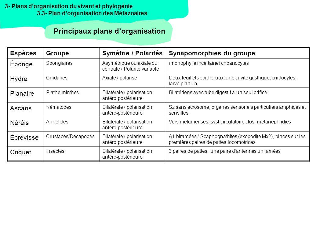 Principaux plans d'organisation