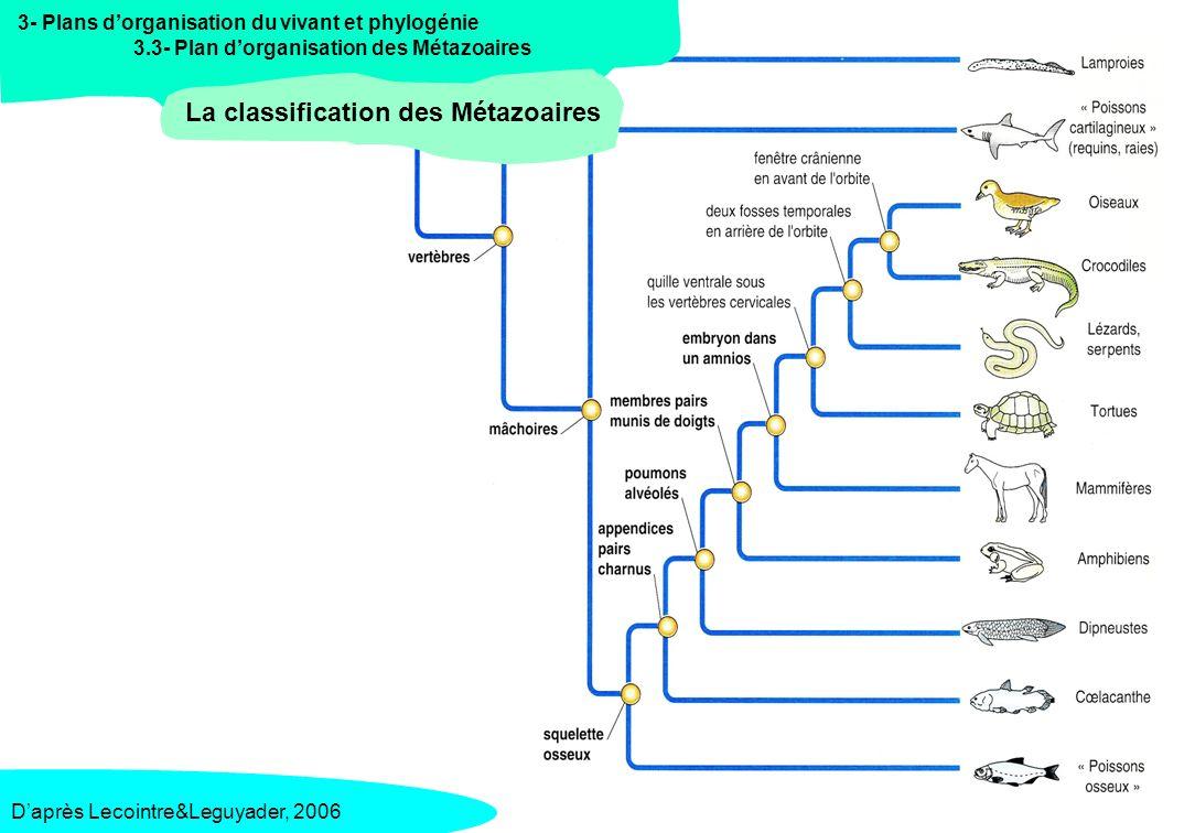 La classification des Métazoaires