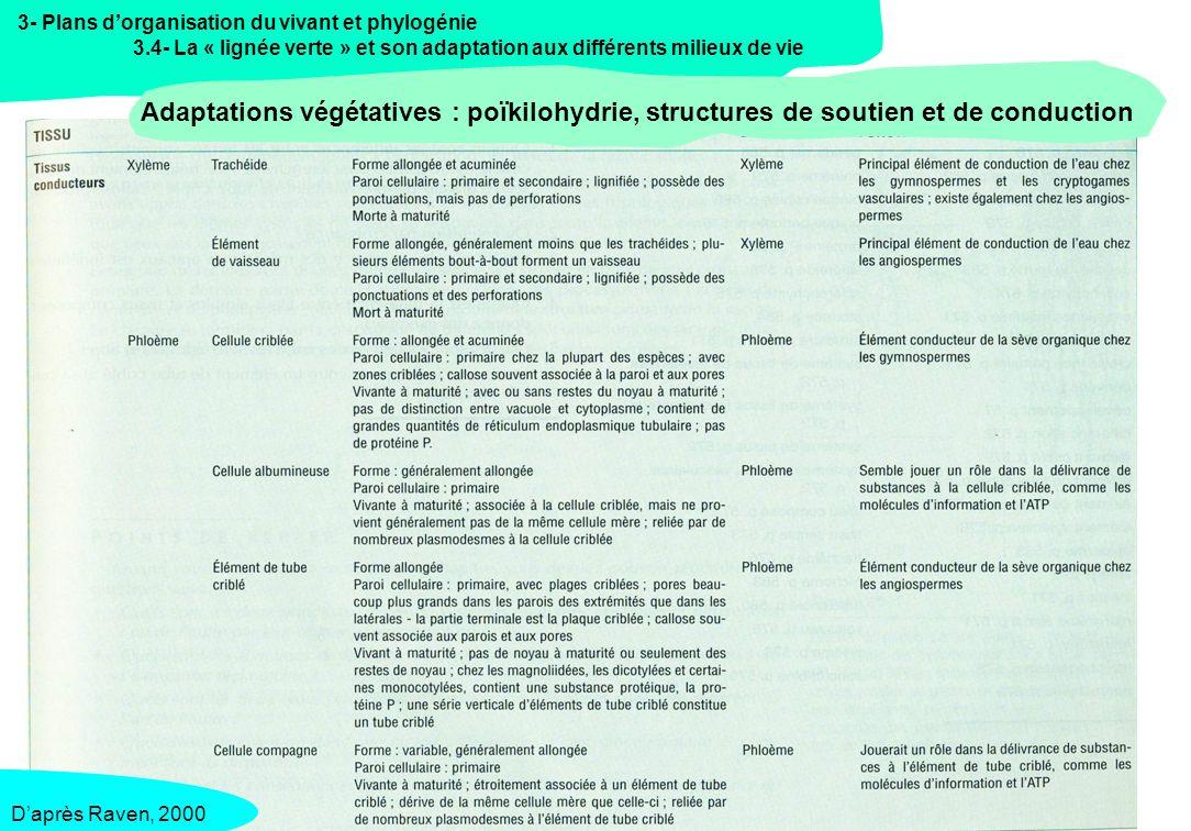 3- Plans d'organisation du vivant et phylogénie