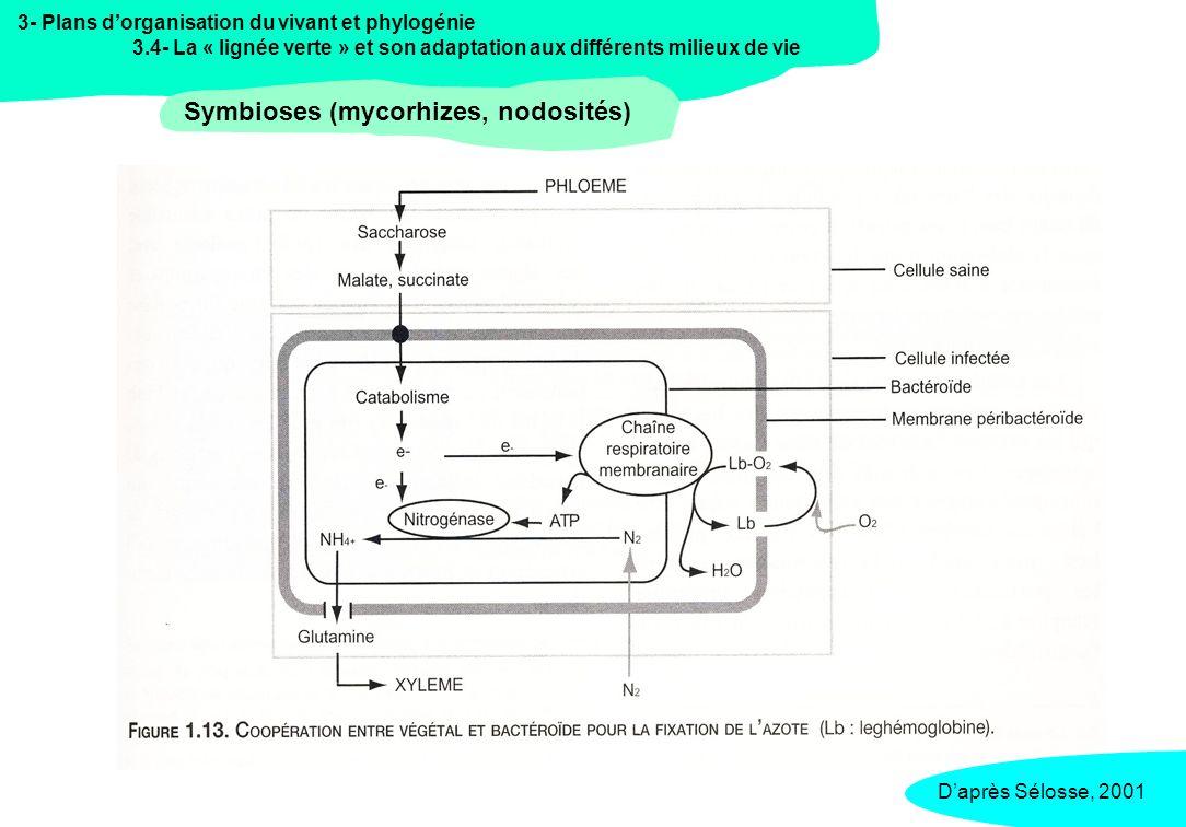 Symbioses (mycorhizes, nodosités)