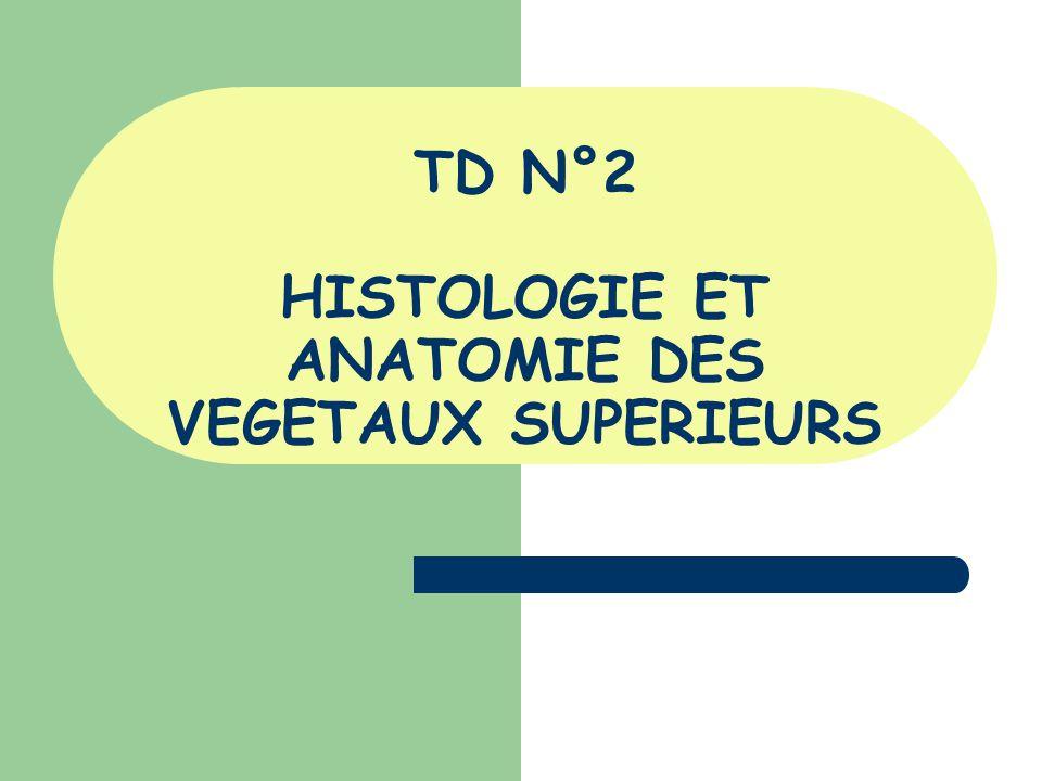 TD N°2 HISTOLOGIE ET ANATOMIE DES VEGETAUX SUPERIEURS