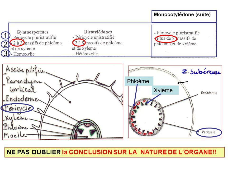 1 2 3 NE PAS OUBLIER la CONCLUSION SUR LA NATURE DE L'ORGANE!! Phloème