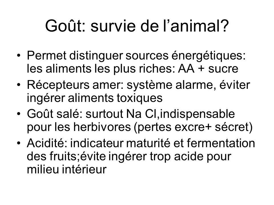 Goût: survie de l'animal