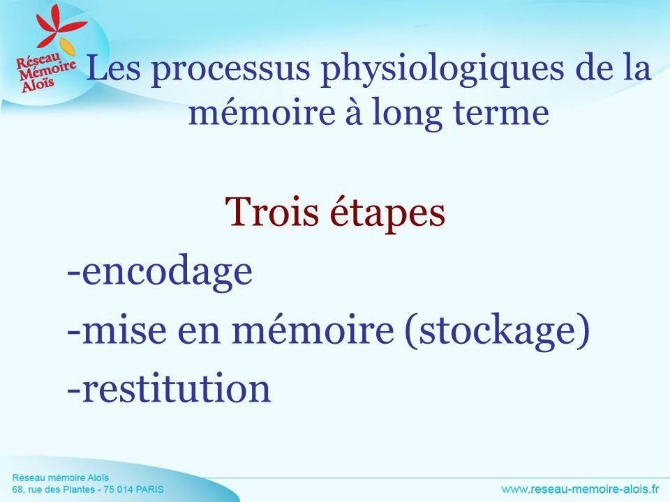 Les processus physiologiques de la mémoire à long terme