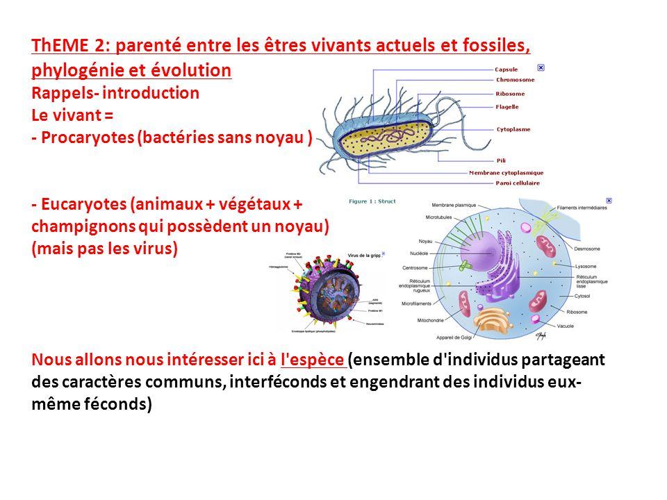 ThEME 2: parenté entre les êtres vivants actuels et fossiles, phylogénie et évolution