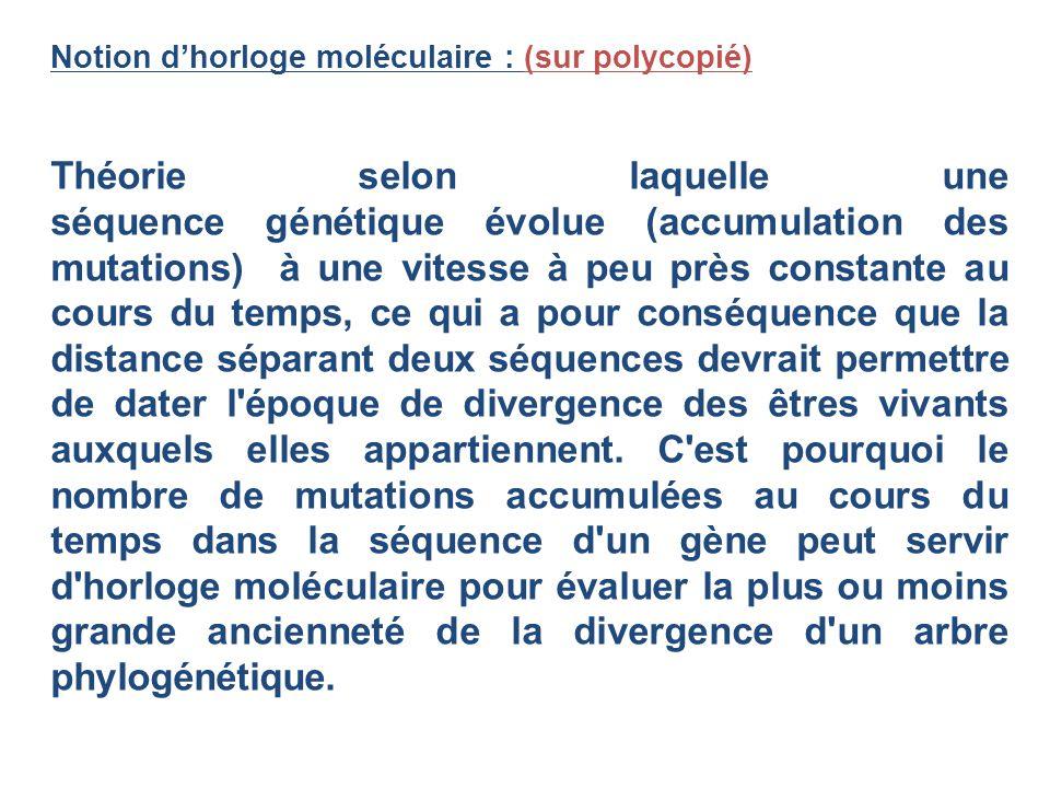 Notion d'horloge moléculaire : (sur polycopié)