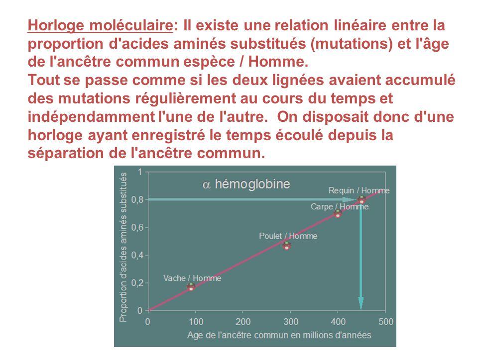 Horloge moléculaire: Il existe une relation linéaire entre la proportion d acides aminés substitués (mutations) et l âge de l ancêtre commun espèce / Homme.