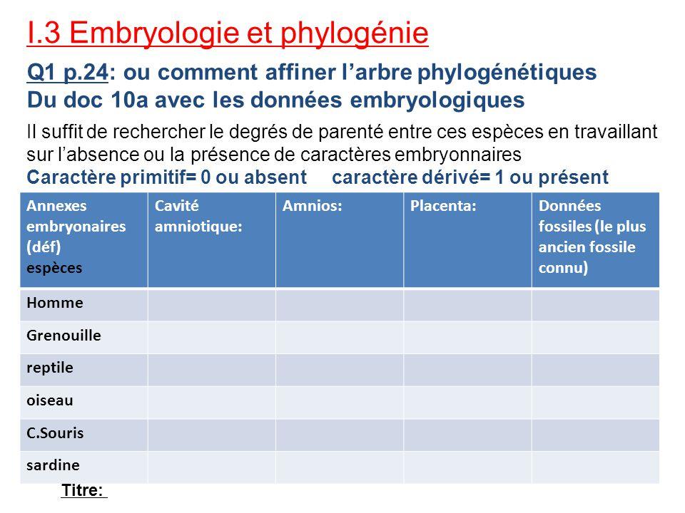 I.3 Embryologie et phylogénie