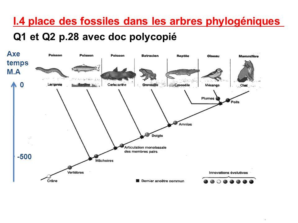 I.4 place des fossiles dans les arbres phylogéniques