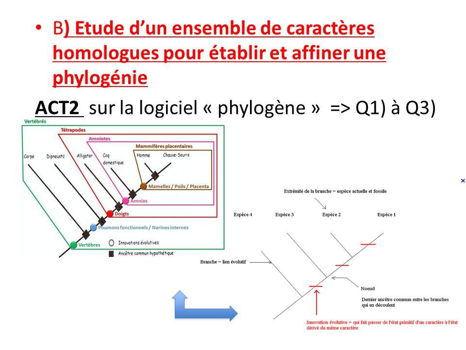 B) Etude d'un ensemble de caractères homologues pour établir et affiner une phylogénie