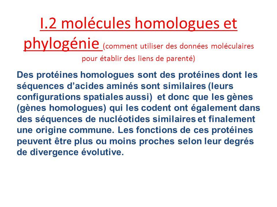 I.2 molécules homologues et phylogénie (comment utiliser des données moléculaires pour établir des liens de parenté)