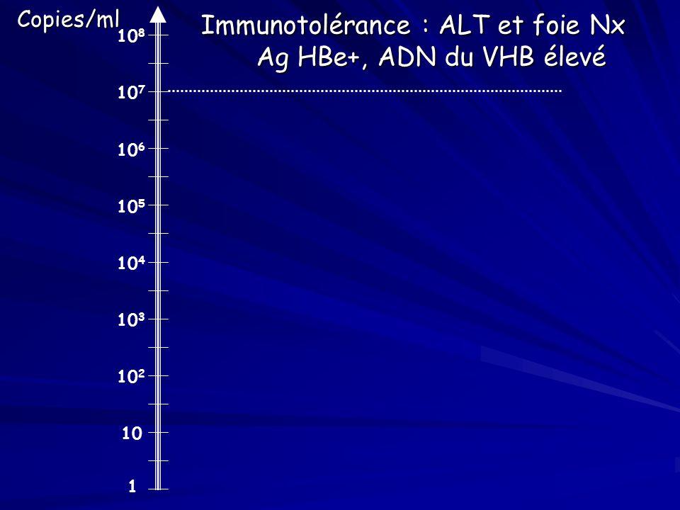 Immunotolérance : ALT et foie Nx Ag HBe+, ADN du VHB élevé