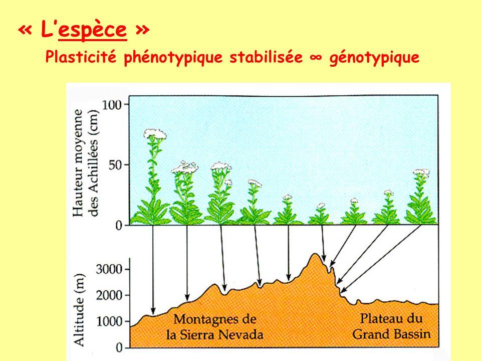« L'espèce » Plasticité phénotypique stabilisée ∞ génotypique
