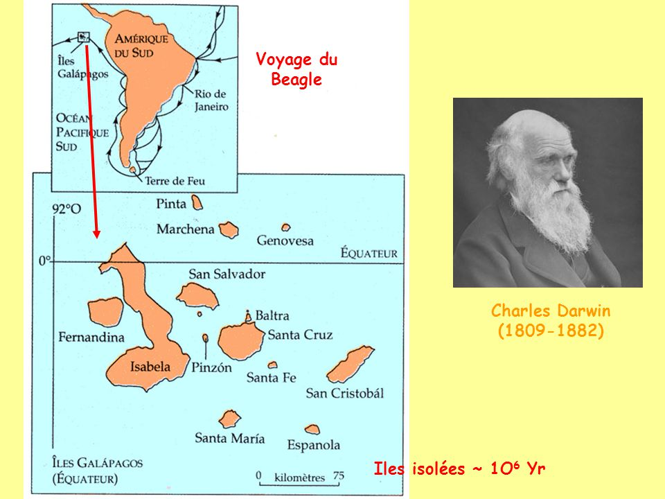 Voyage du Beagle Charles Darwin (1809-1882) Iles isolées ~ 1O6 Yr