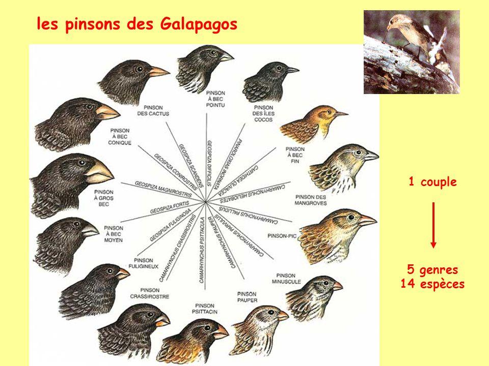 les pinsons des Galapagos