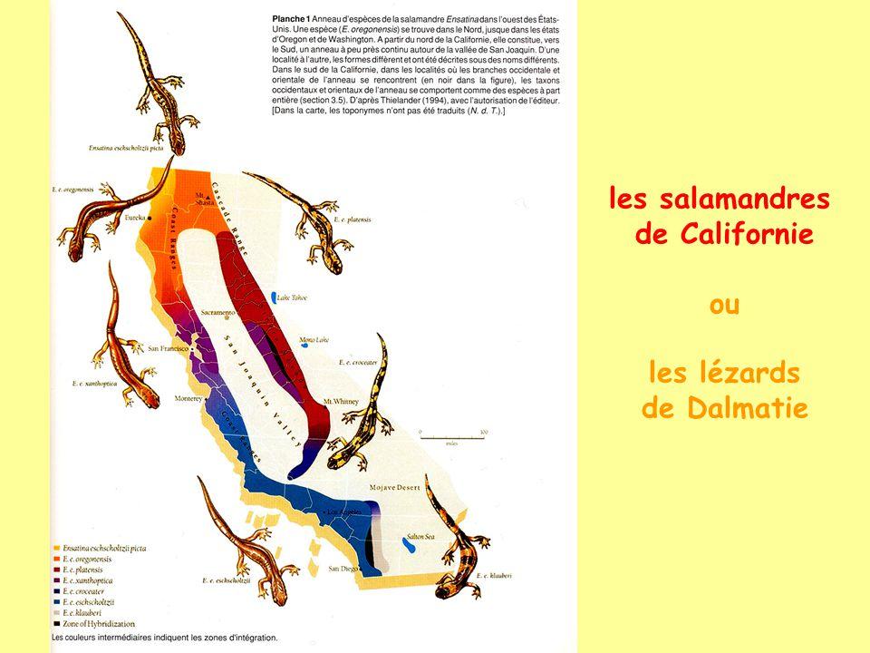 les salamandres de Californie ou les lézards de Dalmatie