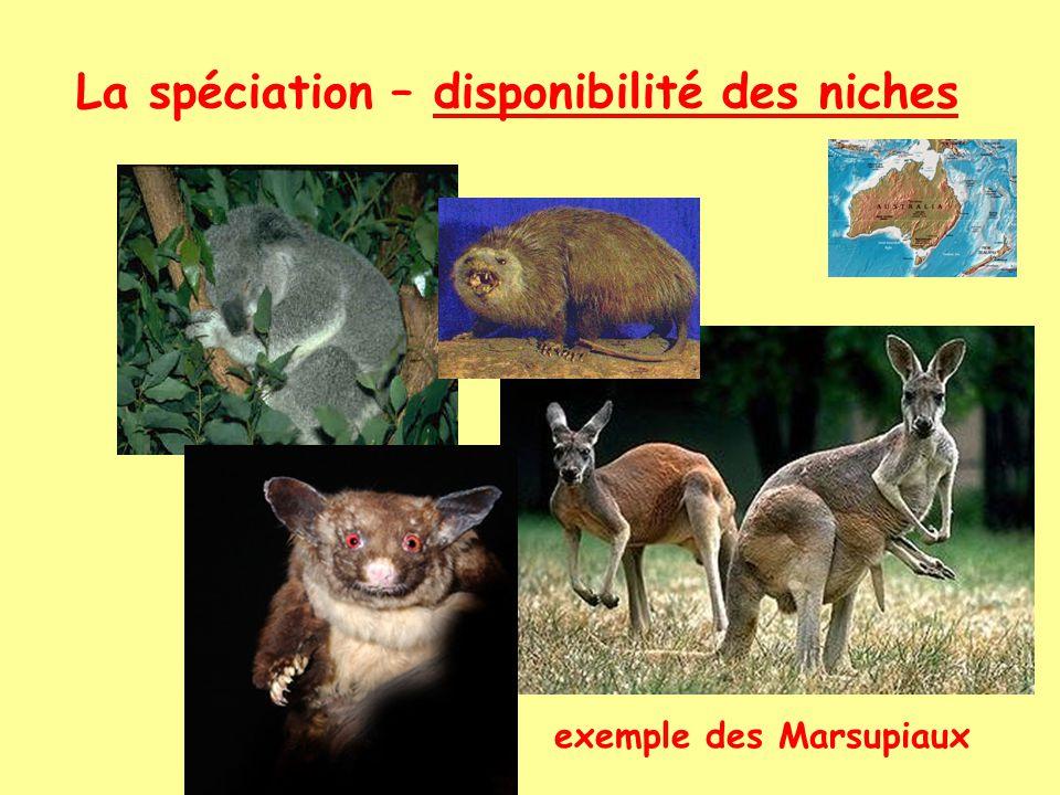 exemple des Marsupiaux
