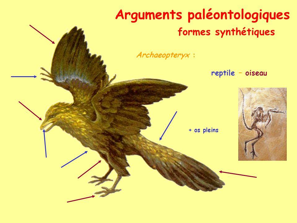 Arguments paléontologiques formes synthétiques