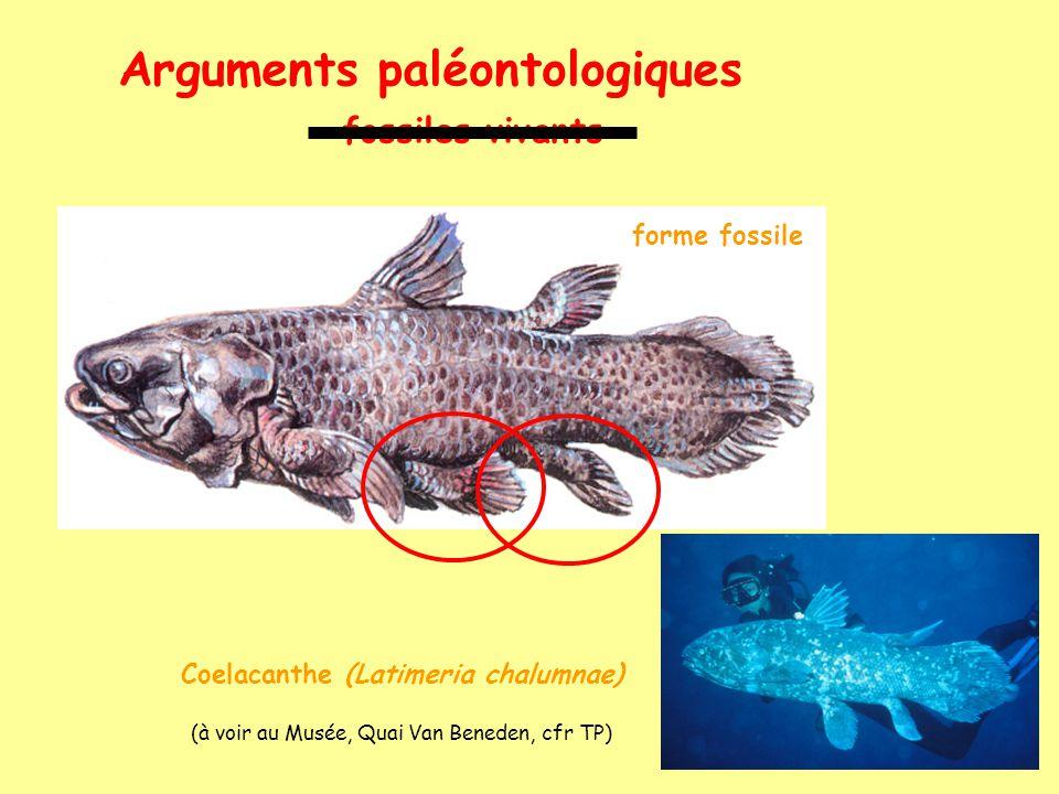 Coelacanthe (Latimeria chalumnae)