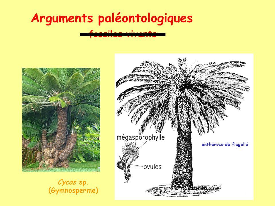 Arguments paléontologiques fossiles vivants