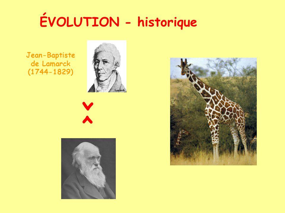 ÉVOLUTION - historique