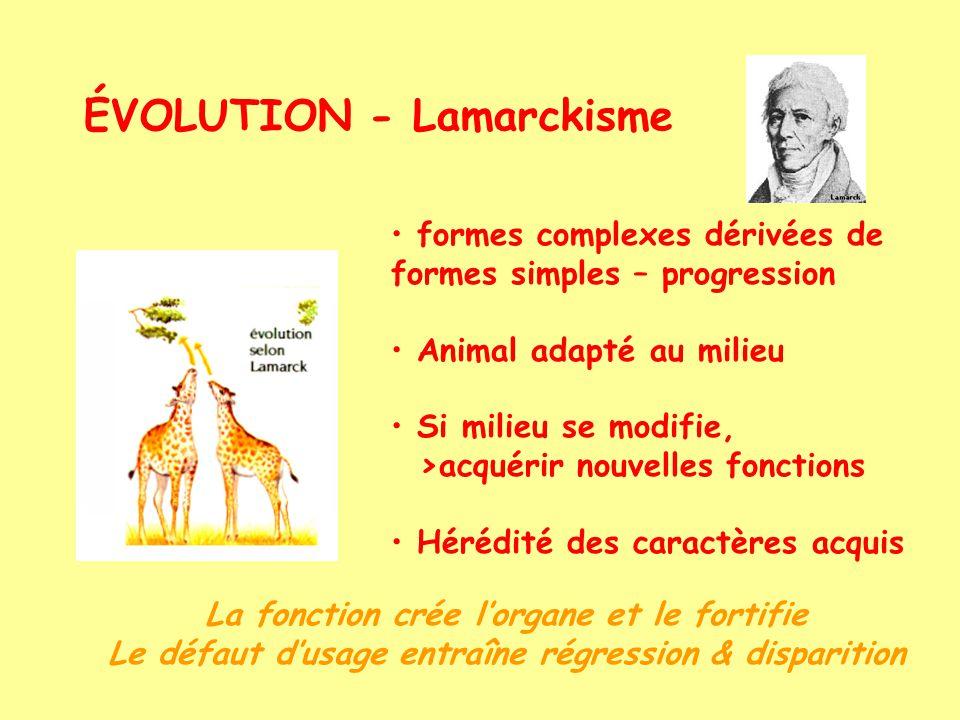 ÉVOLUTION - Lamarckisme