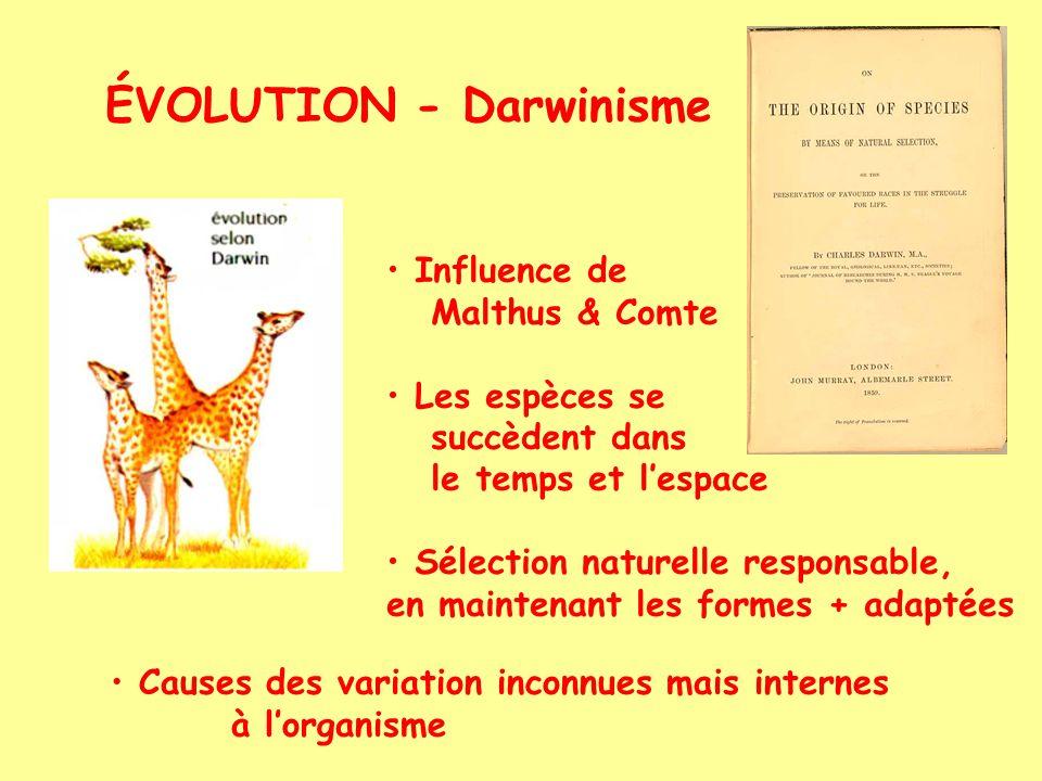 ÉVOLUTION - Darwinisme