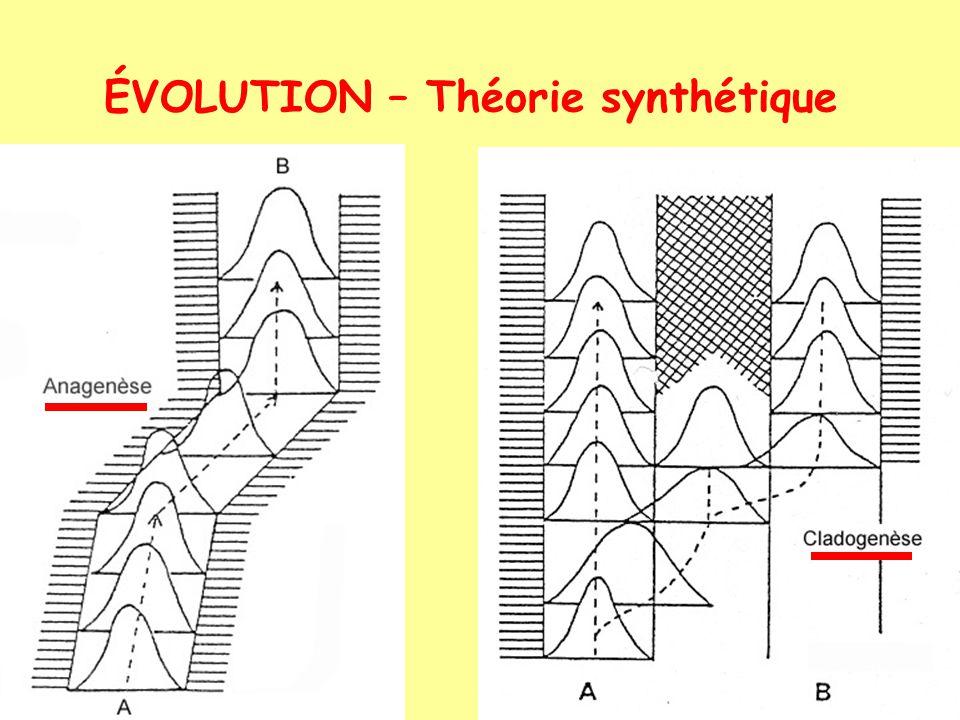ÉVOLUTION – Théorie synthétique