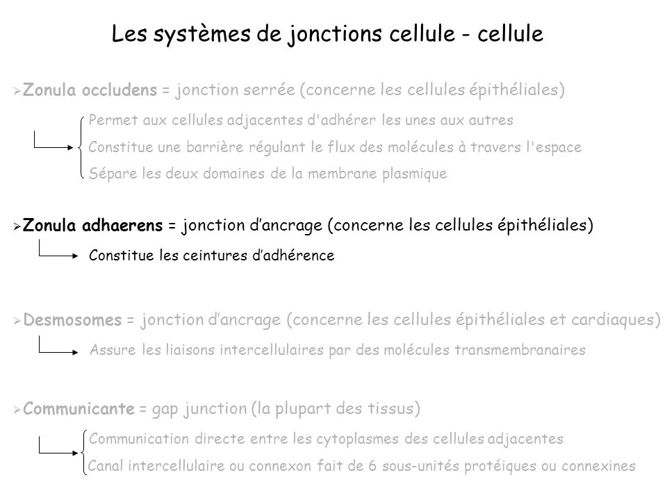 Les systèmes de jonctions cellule - cellule