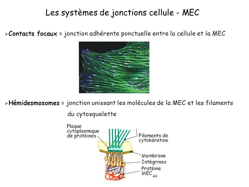 Les systèmes de jonctions cellule - MEC