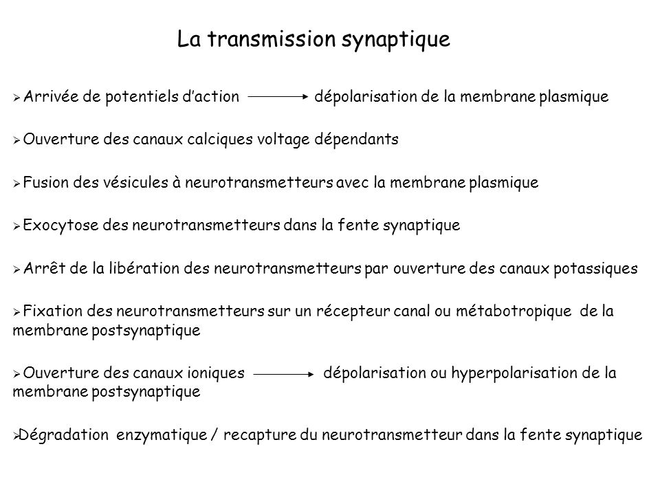 La transmission synaptique