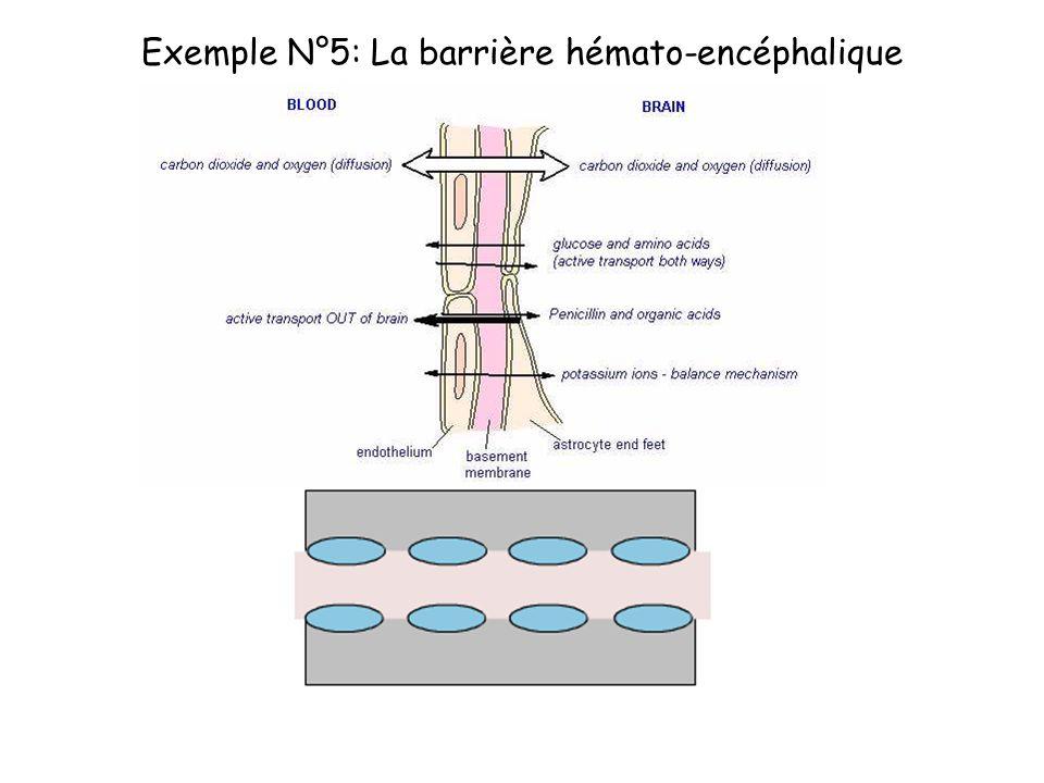 Exemple N°5: La barrière hémato-encéphalique