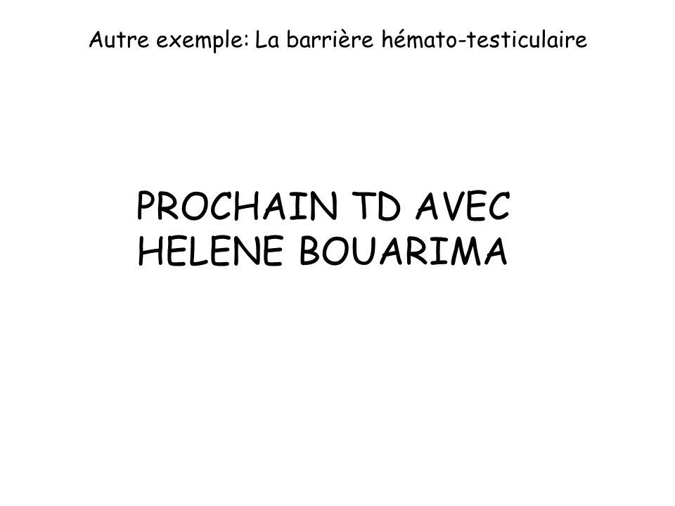 Autre exemple: La barrière hémato-testiculaire
