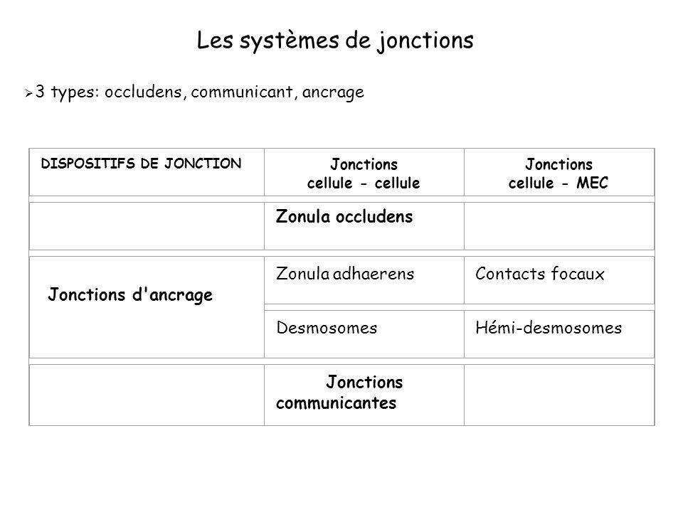 Les systèmes de jonctions