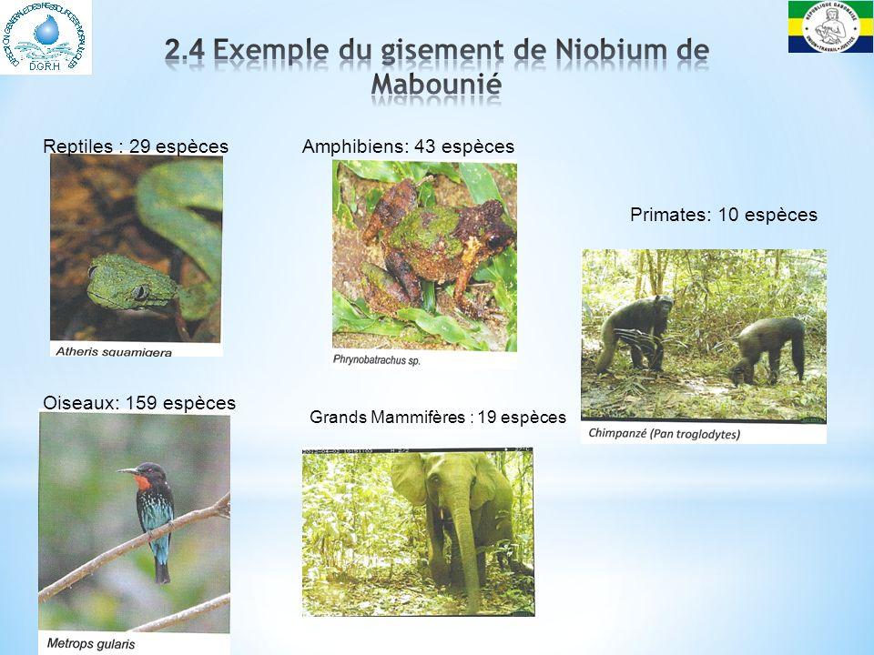 2.4 Exemple du gisement de Niobium de Mabounié
