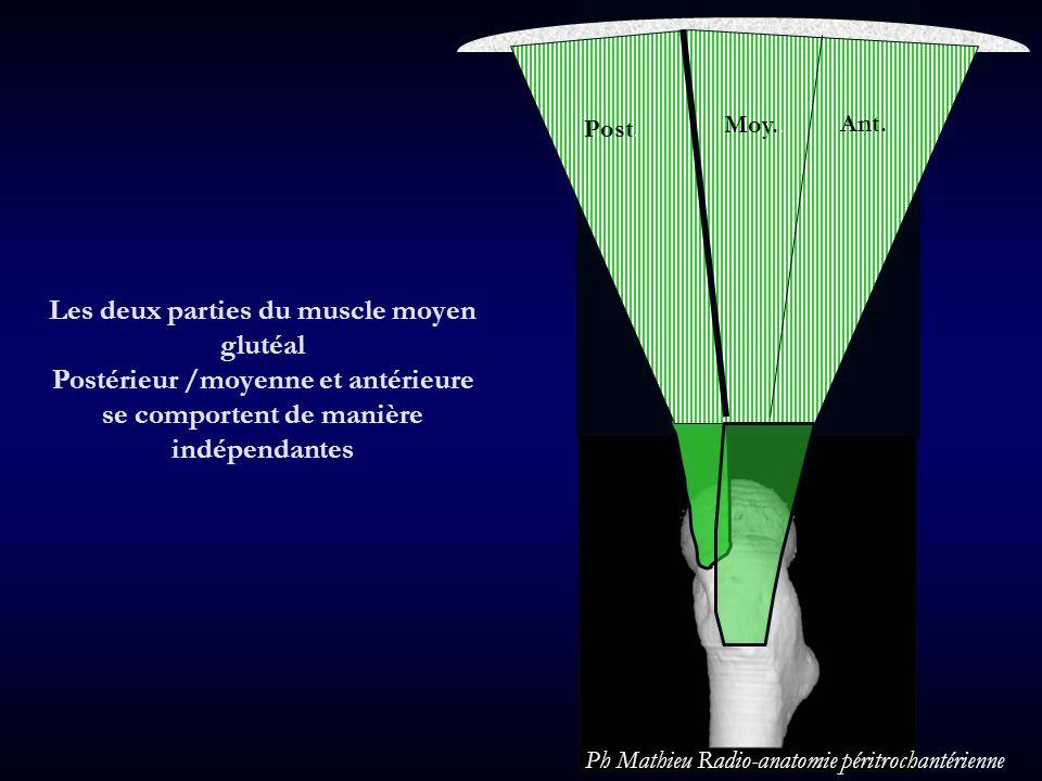 Post Moy Ant Les deux parties du muscle moyen glutéal