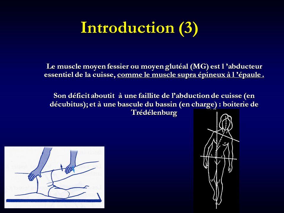 Introduction (3) Le muscle moyen fessier ou moyen glutéal (MG) est l 'abducteur essentiel de la cuisse, comme le muscle supra épineux à l 'épaule .