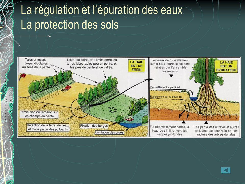 La régulation et l'épuration des eaux La protection des sols