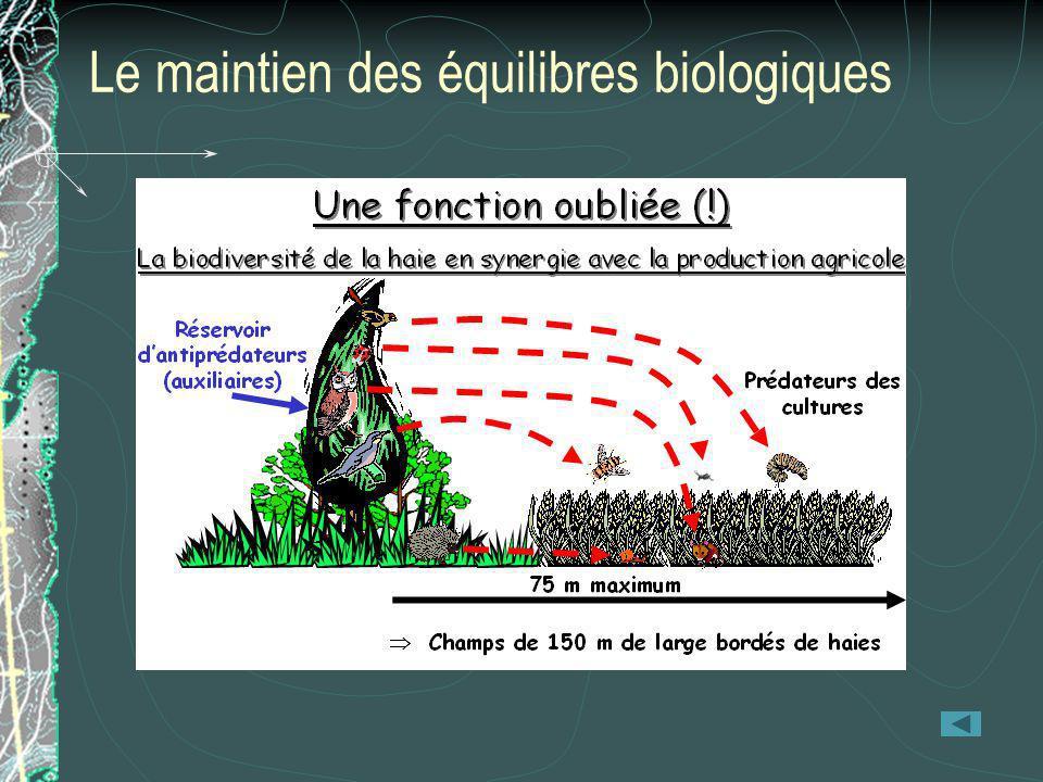 Le maintien des équilibres biologiques