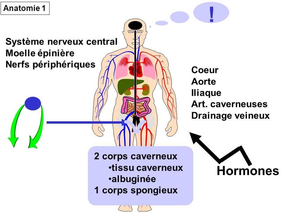 ! Hormones Système nerveux central Moelle épinière Nerfs périphériques