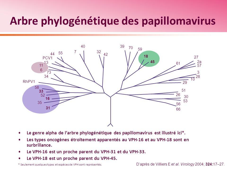Arbre phylogénétique des papillomavirus