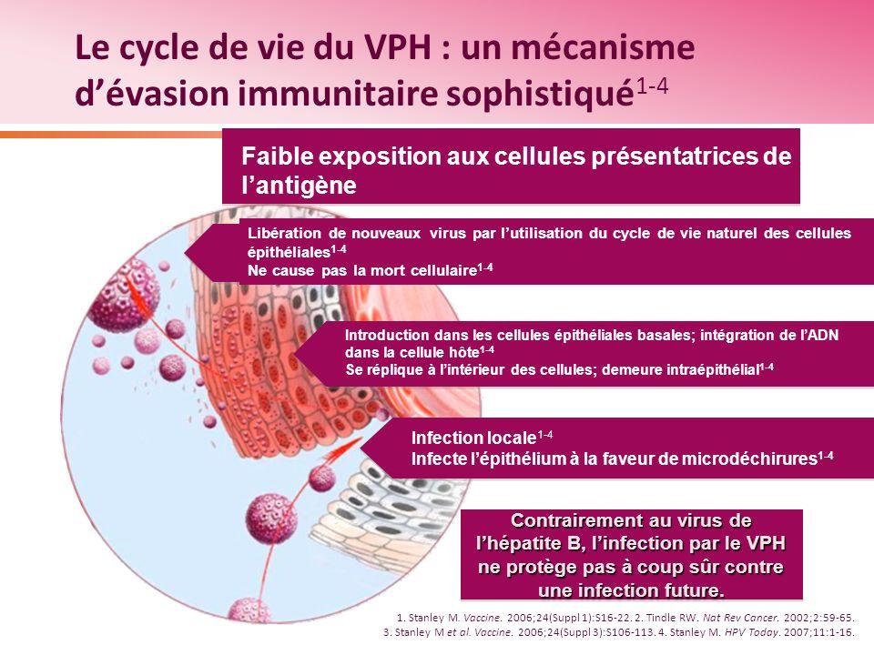 Le cycle de vie du VPH : un mécanisme d'évasion immunitaire sophistiqué1-4