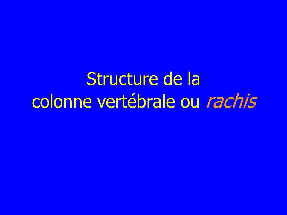 Structure de la colonne vertébrale ou rachis