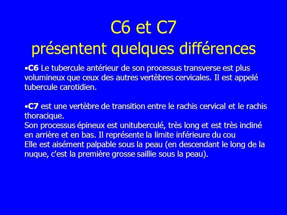 C6 et C7 présentent quelques différences