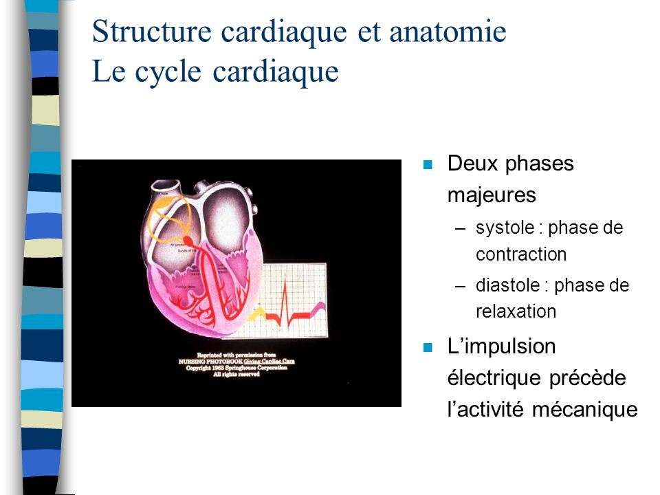 Structure cardiaque et anatomie Le cycle cardiaque